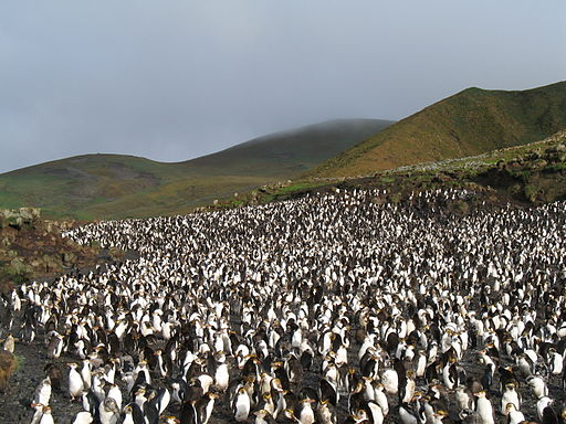 Sea of Penguins - Who WIns?